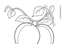 Apricot Colouring Pages