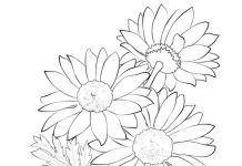 Barberton Flowers Colouring Pages