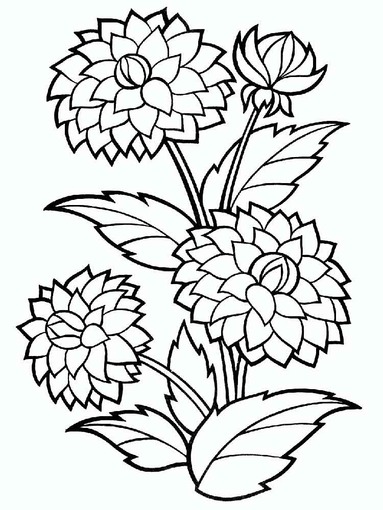 Bushy Dahlia Flower Colouring Pages