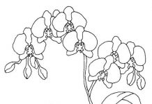 Orchid Flower Colouring Pages