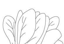 Spinach Colouring Pages