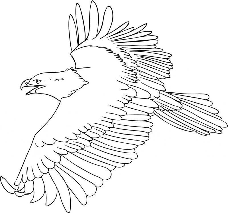 inspirational coloring pages eagle easy of coloring pages eagle easy 2